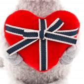 Кот Обормот с сердцем