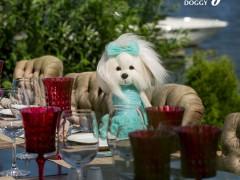 Lucky Doggy