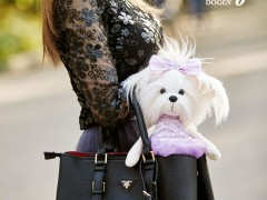 Lucky Doggy
